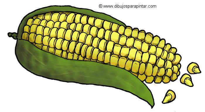 dibujo grande de maiz