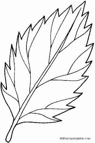 Soluciones sobre el examen de las hojas