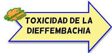 toxicidad dieffembaquia