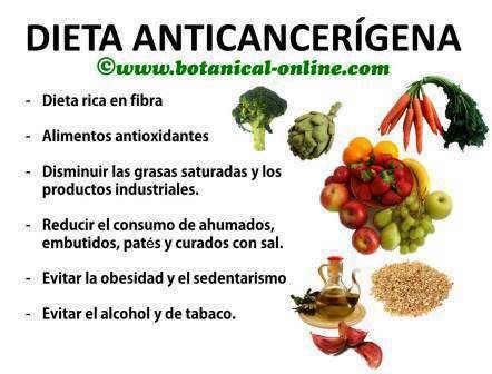 Dieta ant cancerigena - Alimentos que evitan el cancer ...