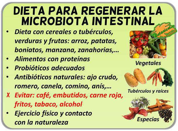 Dieta para regenerar la flora intestinal da ada - Alimentos para combatir la diarrea ...