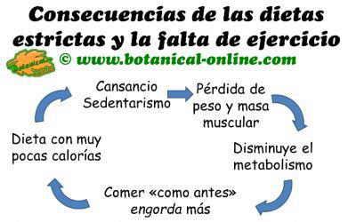 consecuencias de dietas estrictas y falta de ejercicio, efecto yo-yo y causas del metabolismo lento