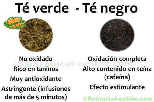 diferencias entre te verde y te negro propiedades
