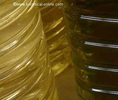 Diferencias entre el aceite de oliva y el de girasol