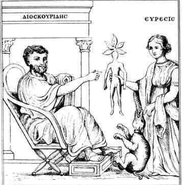Dibujo de Dioscórides