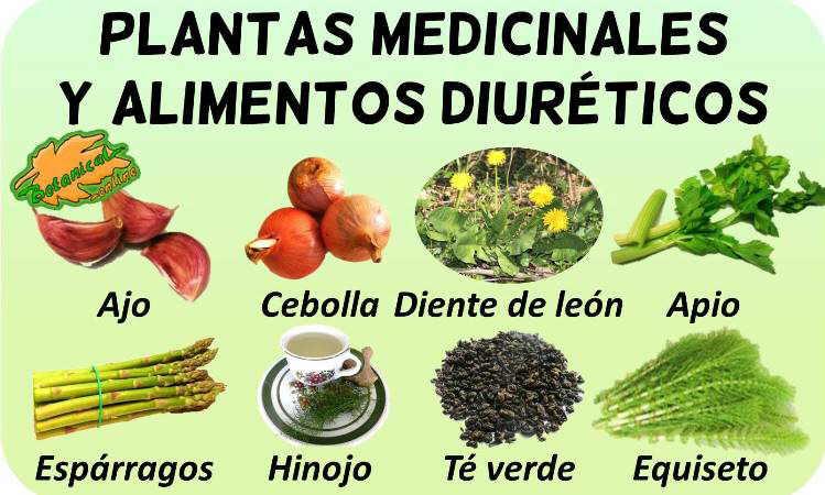 remedios diureticos tratamiento natural plantas medicinales