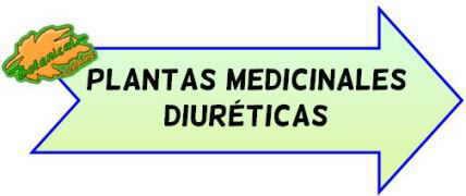 plantas medicinales diureticas