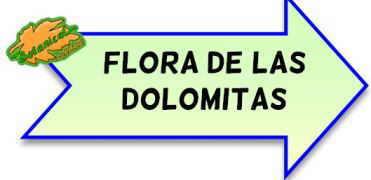 flora de las dolomitas