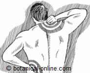 Dolores musculares por falta de biotina