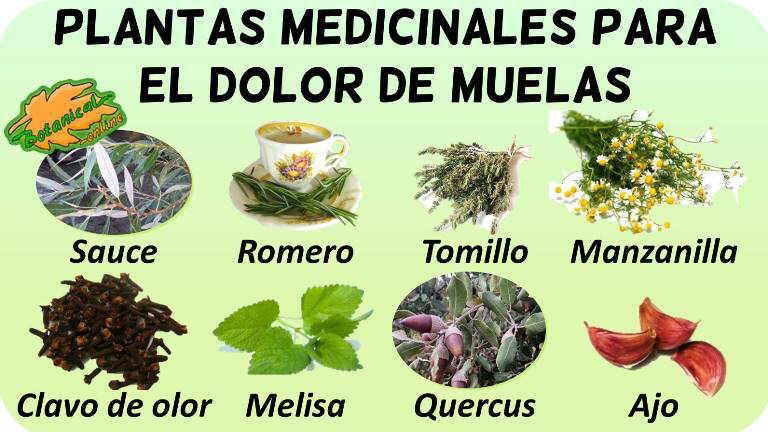 plantas medicinales para el dolor de muelas o dientes
