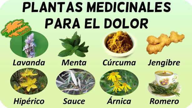 plantas medicinales para el dolor