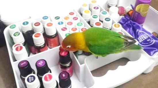 agapornis aceites esenciales mascotas