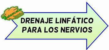 drenaje linfatico nervios