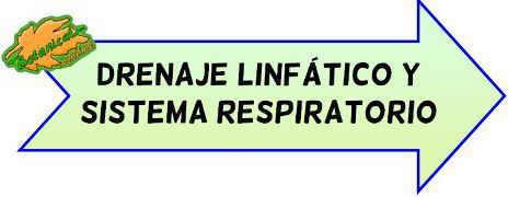 drenaje linfatico respiratorio asma