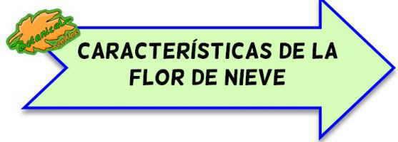 caracteristicas de la edelweiss