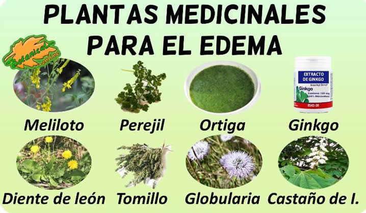remedios edema tratamiento natural plantas medicinales