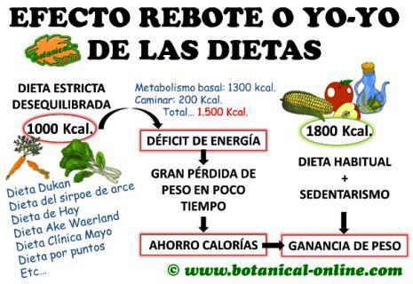 efecto rebote yo yo de las dietas, dieta estricta, perder kilos, ahorro de calorías y ganancia de peso,