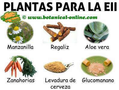 plantas y remedios para la enfermedad inflamatoria intestinal o eii