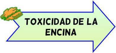 toxicidad de la encina