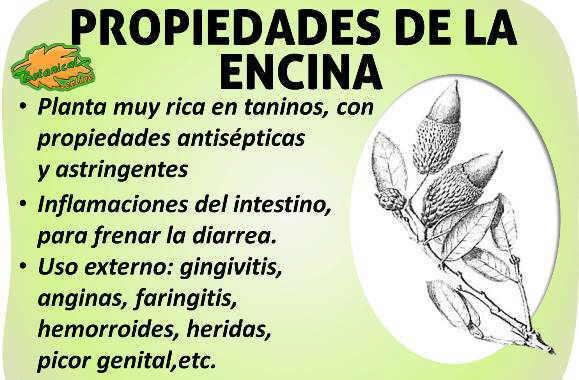 Propiedades medicinales de la encina taninos