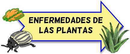 enfermedades plantas