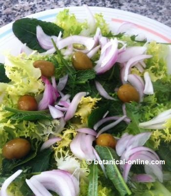 recetas ensalada borraja