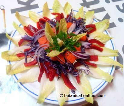 Ensalada fácil de endivias, col lombarda, pimiento, zanahoria, perejil