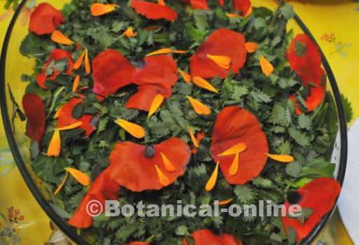 Foto de ensalada silvestre con hojas de pimpinela y pétalos de amapola