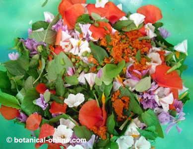 ensalada flores silvestres