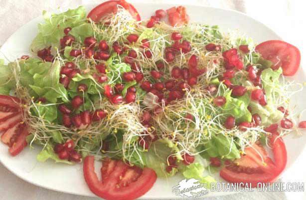 ensalada con germinados de alfalfa