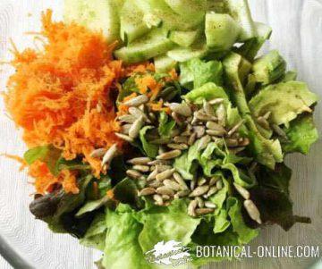 ensalada semillas zanahoria pepino aguacate