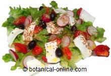 Ensalada con queso rabanitos y tomates