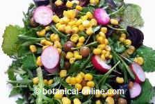 ensalada de rúcula con maíz
