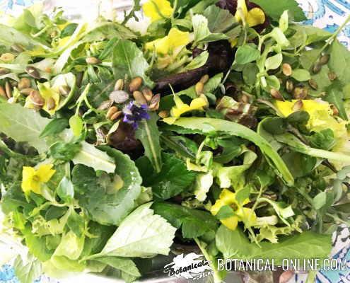 ensalada plantas silvestres