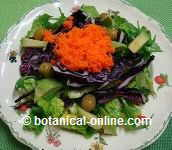 Ensalada zanahoria y col morada