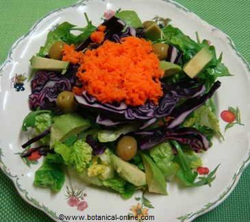 Receta de ensalada con col lombarda for Como cocinar col lombarda