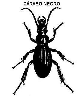 Alimentacin de los insectos