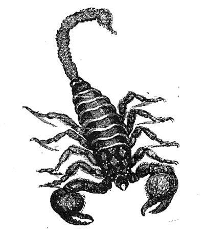 Características de los Escorpiones