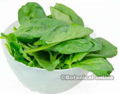 leaves of fresh spinach