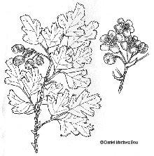 Dibujos de arbustos