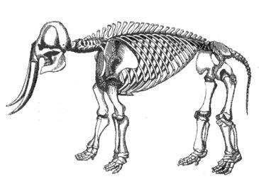 esqueleto-e