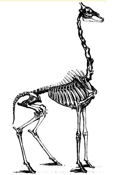 esqueleto-j