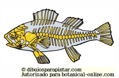 esqueleto de pez