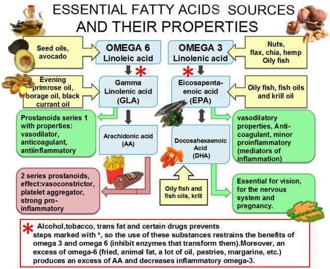 Foods Containing Arachidonic Acid