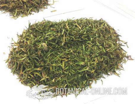 hojas secas de estragon planta