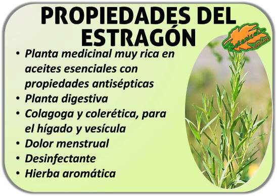 propiedades del estragon artemisia dracunculus beneficios