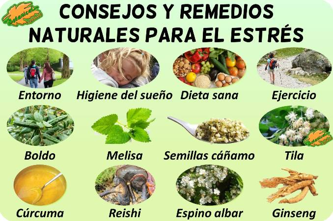 estres remedios con plantas medicinales curar tratamiento natural