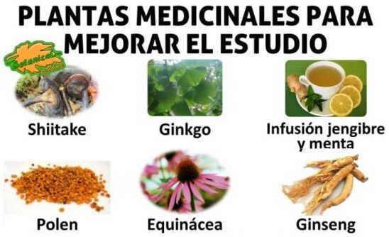 plantas medicinales para estudiantes para el estudio memoria y concentración