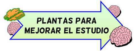 plantas para estudiar