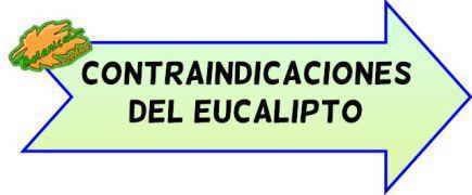 contraindicaciones del eucalipto